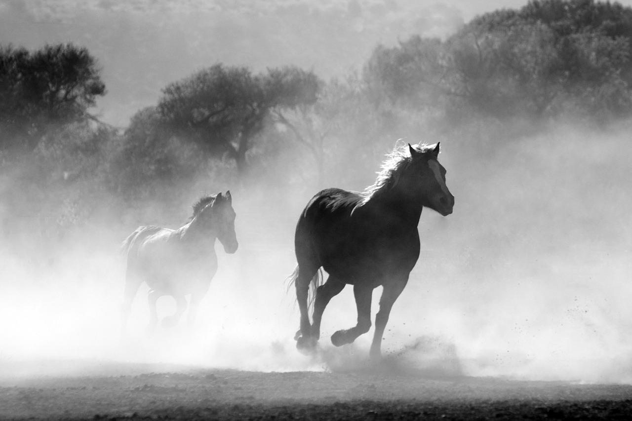 Krvnik u Mlaki hicima iz pištolja usmrtio dva konja