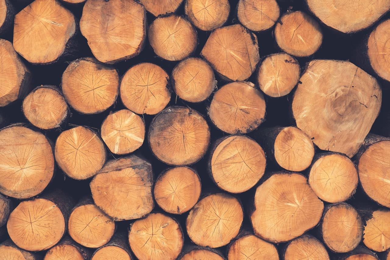 Opustošili šumu i zaradili preko 52 tisuće kuna